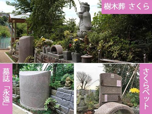 戸塚の樹木葬|散骨埋葬「さくら」|さくらペット|墓誌「永遠(とわ)」